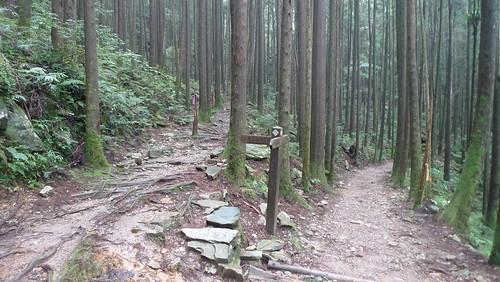 20140809-橫嶺山步道 (21)