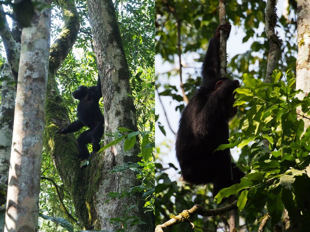 simpanssi4