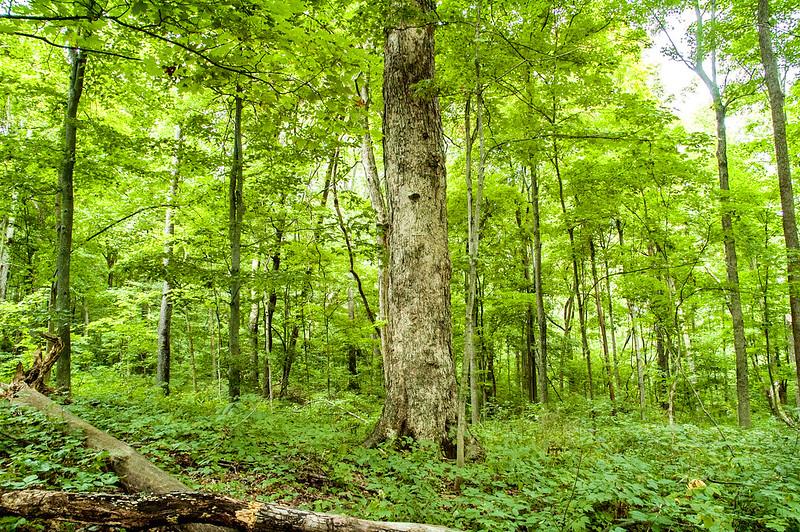 John Sunman's Woods Nature Preserve - August 16, 2014