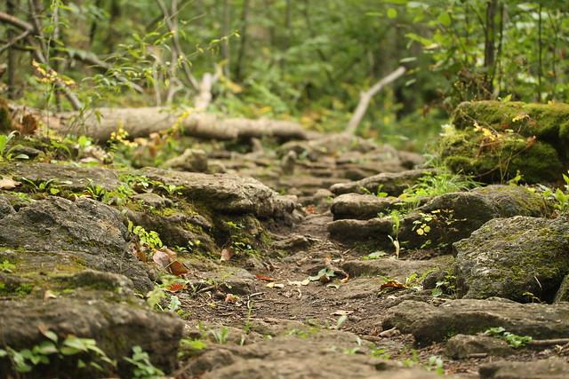 Voyager à pied sur le Bruce Trail, par Danielle Scott