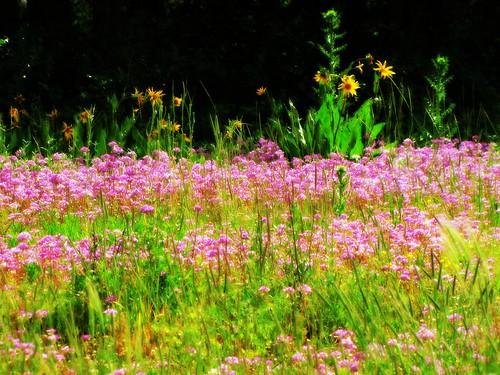 flowers rural colorado wildflowers orton cimarronvalley
