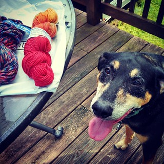 I think Tut was excited about winding yarn, what do you think? #dogstagram #instadog #yarn #knitting #rescued #coonhoundmix #berroco #socksthatrock #adoptdontshop