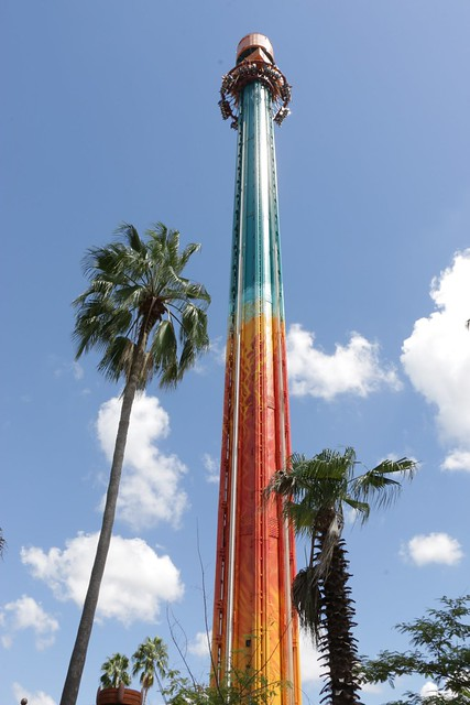 Up Close With Falcon 39 S Fury As Busch Gardens Tampa Brings