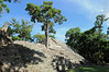 Overgrown Mayan Ruins at Copán, Honduras