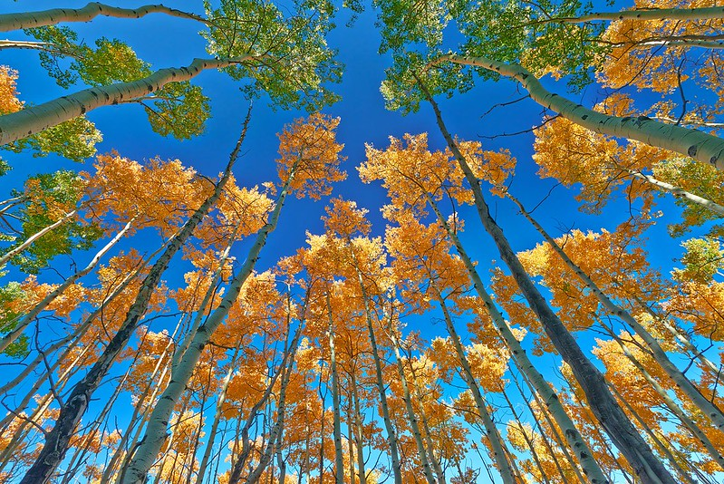 Aspen vista - Santa Fe