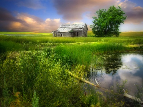 house tree abandoned water grass rural countryside northdakota prairie