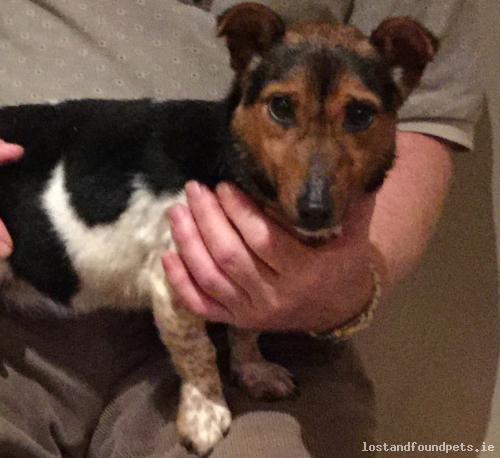 [Reunited] Wed, Mar 29th, 2017 Lost Female Dog - Crover, Crover,mountnugent A82 Wv60, Cavan