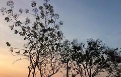 #pc17 #dinamalar #madukarai #iphone5s #photography #prabhuclicks