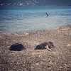 #attica #greece #dog #seaside #loutsa #artemis