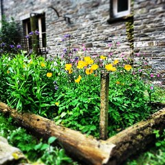Gorgeously small wild garden in the Brecon Beacons