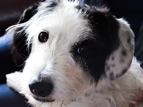 Jessie the Dog