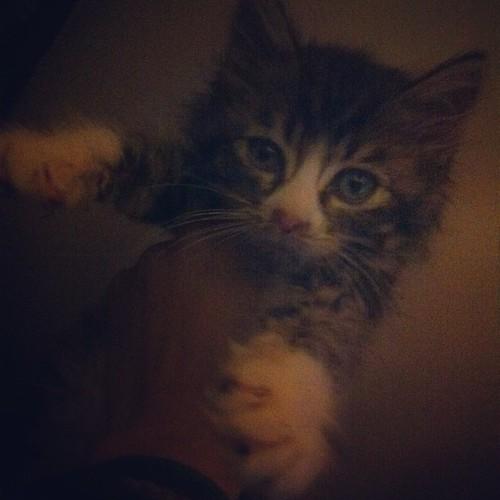 Woodie, de wilde kat