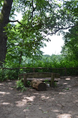 Grunewald Berlin_ bench in the shade of trees
