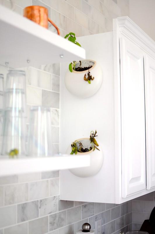 Dead Basil Plants