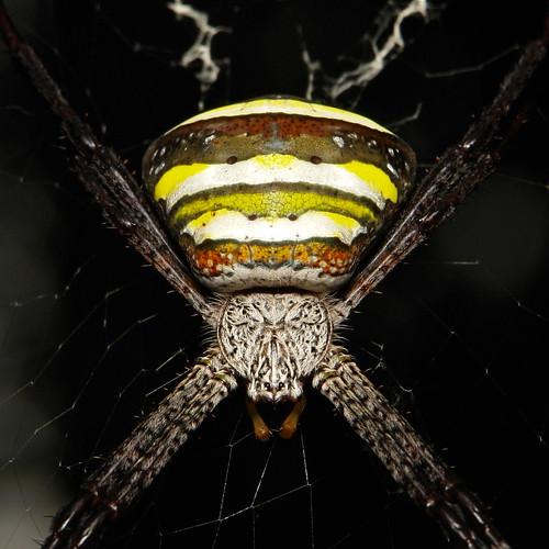 rare spiders of china - 500×500