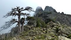 Crête Barcalinu-Cornodello : l'arête Sud du Cornodello