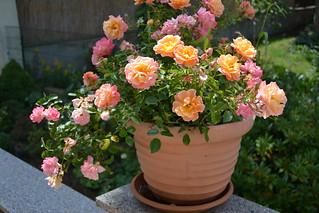 Sommer im Garten 06-07 2014