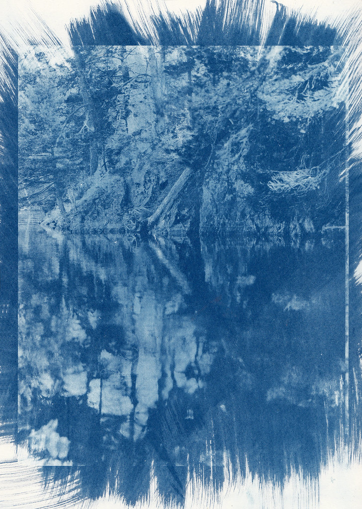 tales from the woods, cyanotype part1