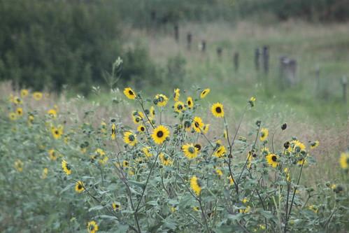 Wildflower beauty.