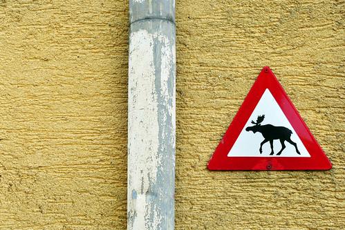 Verkehrsschild Warnschild Hinweisschild Elche