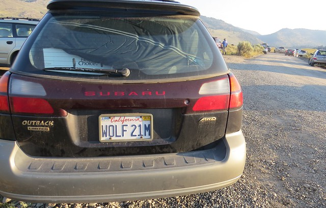 kenteken Wolf 21
