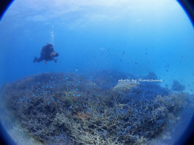 極上サンゴを観察中♪