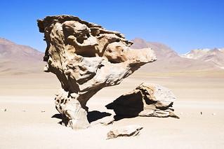 Εικόνα από Stone Tree. blue sky tree yellow rock stone fauna america de arbol sand desert dunes south reserve bolivia formation national eduardo altiplano andean piedra potosi avaroa