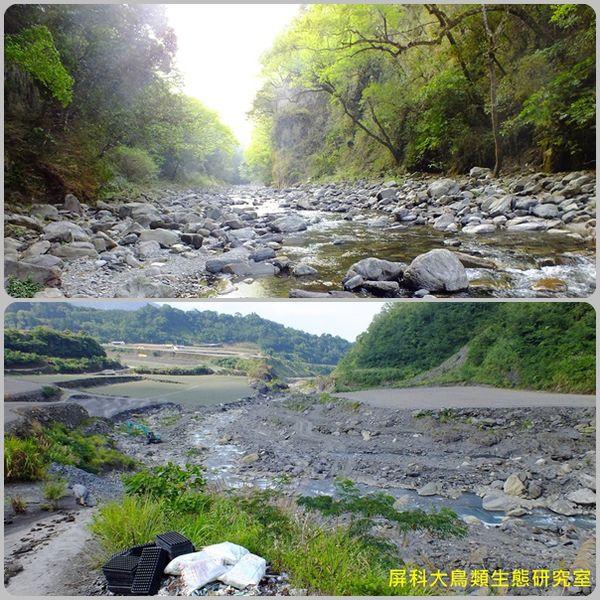 黃魚鴞賴以維生的自然溪流和原始森林正快速消失。圖片來源:汪辰寧、洪孝宇(屏科大野保所鳥類生態研究室)