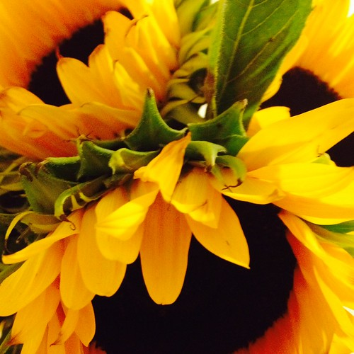 Sunflowers by DJ Lanphier