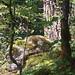 trees & boulder