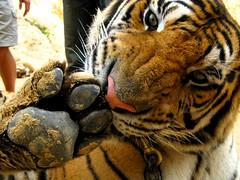 Templo de los Tigres