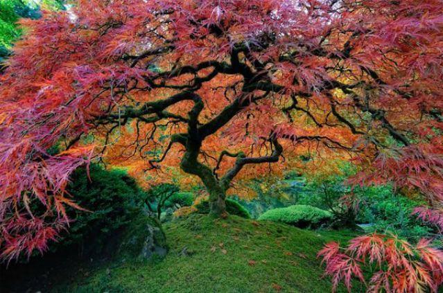 1_amazing-trees-5.jpg