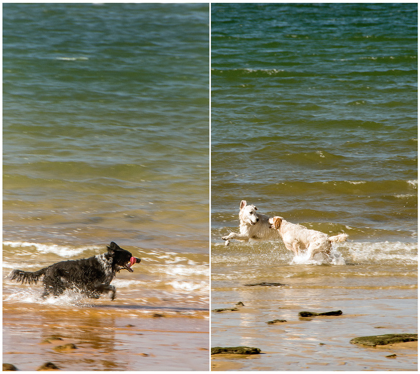 have beach, will frolic