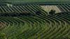 Austria: Wine growing south of Vienna