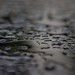 Small photo of After the rain