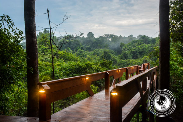 Hiking Trail into the Brazilian Amazon