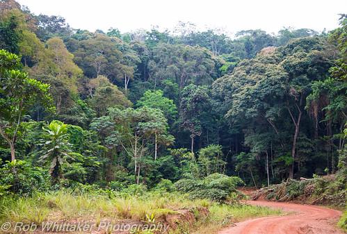 africa canon jungle westafrica canoneos gabon southwestafrica canonphotography canon24105mm robertwhittaker africaoverland jungleroad moyenogooue canoneos5dmkiii sazzoo robwhittakerphotography sazzoocom