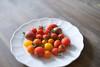Gem Tomatoes 1