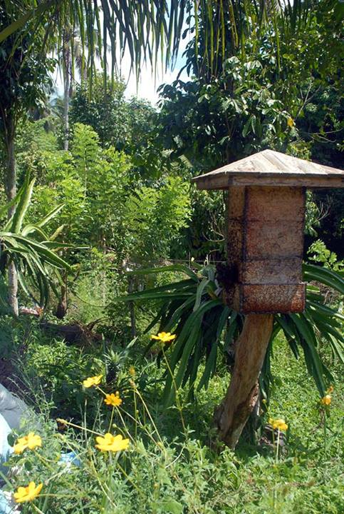 at home with the bees