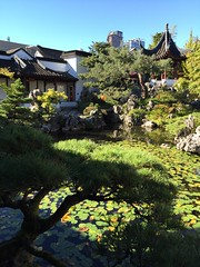 A walk around #Vancouver #FalseCreek and Dr. Sun Yat-Sen #Chinese #garden