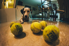Pitia's balls