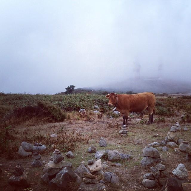 Foggy summit #monchique #portugal