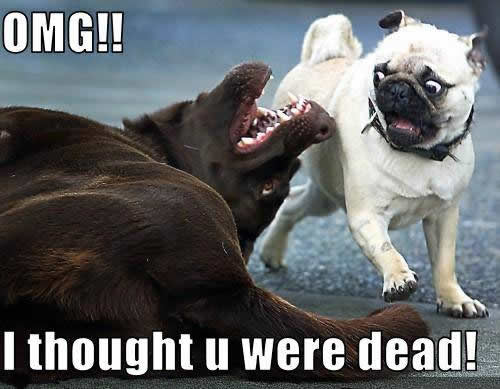 hilarious_animal_pictures_funny_dogs_photos_words_thought_you_were_dead-1MD
