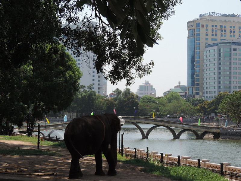 The elephant off chain at Hanoi zoo