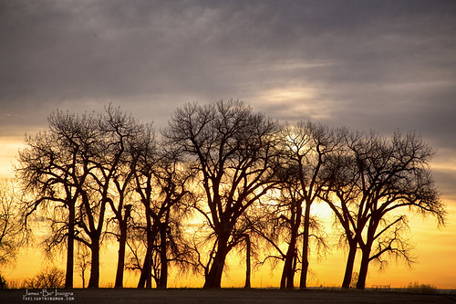 trees sunset sky sunlight weather clouds rural canon landscape golden colorado looking view fineart country scenic cottonwood jamesinsogna