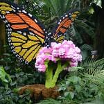 Missouri Botanical Garden Legos 2014 095