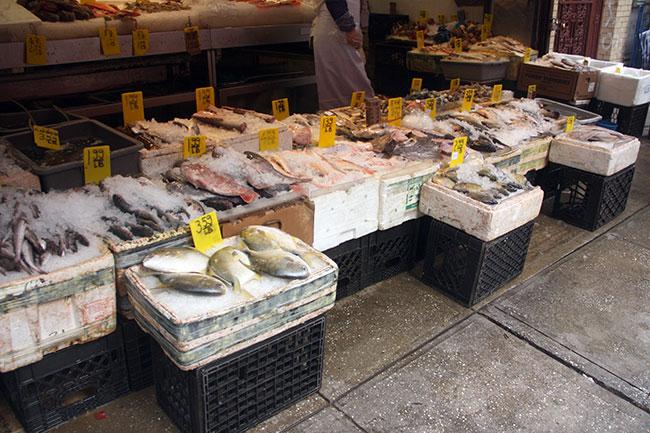 China_Fish