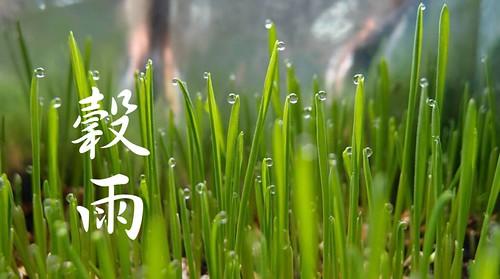 穀雨,資料圖片。