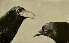"""Image from page 314 of """"Our domestic animals, their habits, intelligence and usefulness;"""" (1907)"""