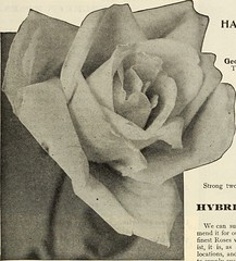 "Image from page 188 of ""Dreer's garden book 1915"" (1915)"